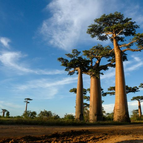 Madagascar, Paris and the US: How can they work together to address the climate crisis?