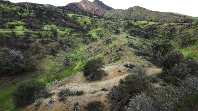 The Santa Monica Mountains After the Fire Spiritual Growth Forum               Sunday, July 28